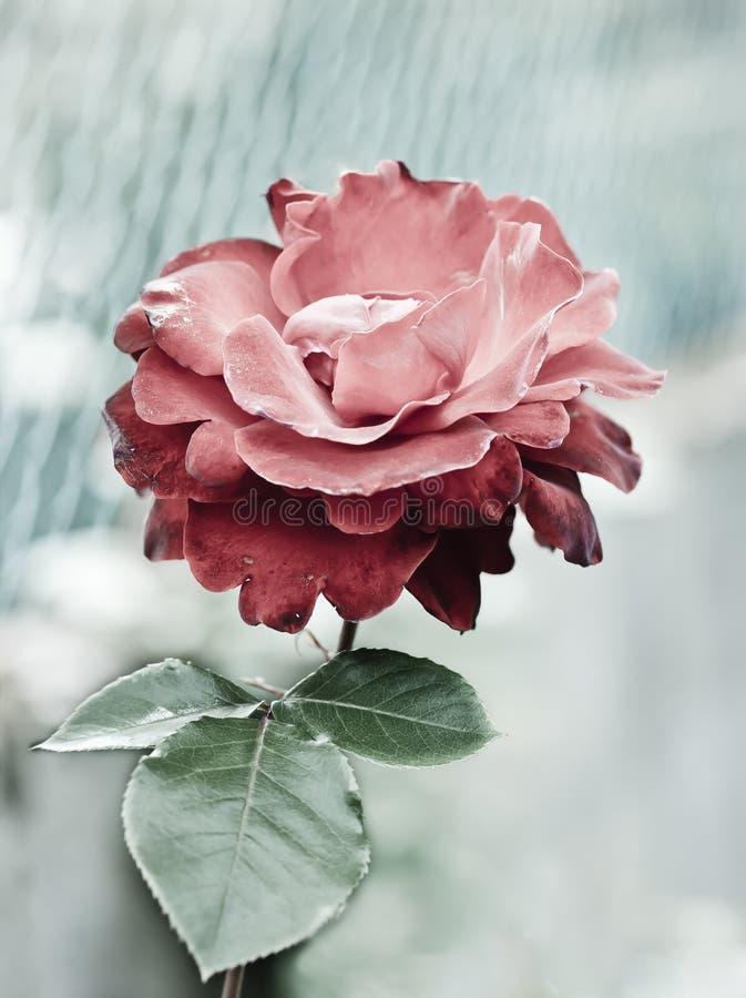Download Blomma fotografering för bildbyråer. Bild av blurriness - 19792151