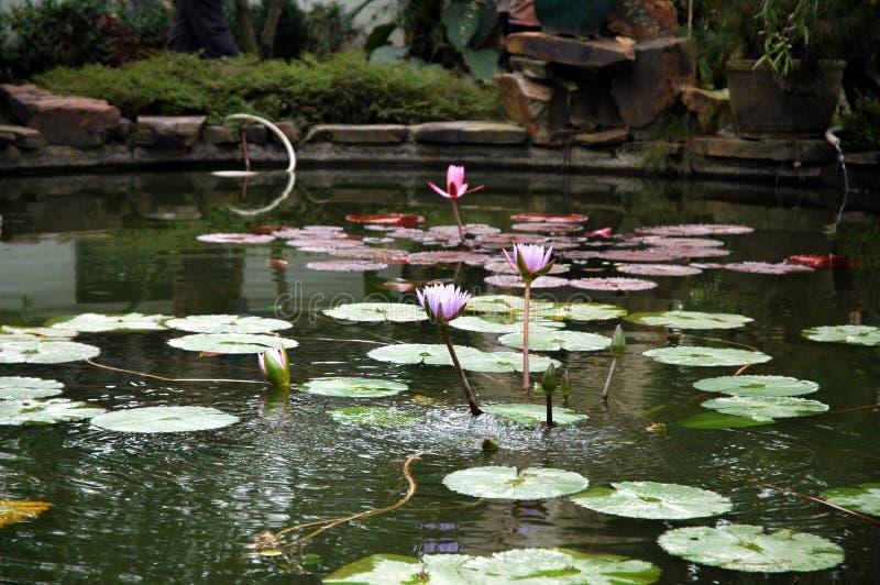 Download Blomma arkivfoto. Bild av växt, blom, sommar, lilly, rött - 289196