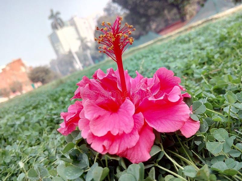 Blomma! arkivbild