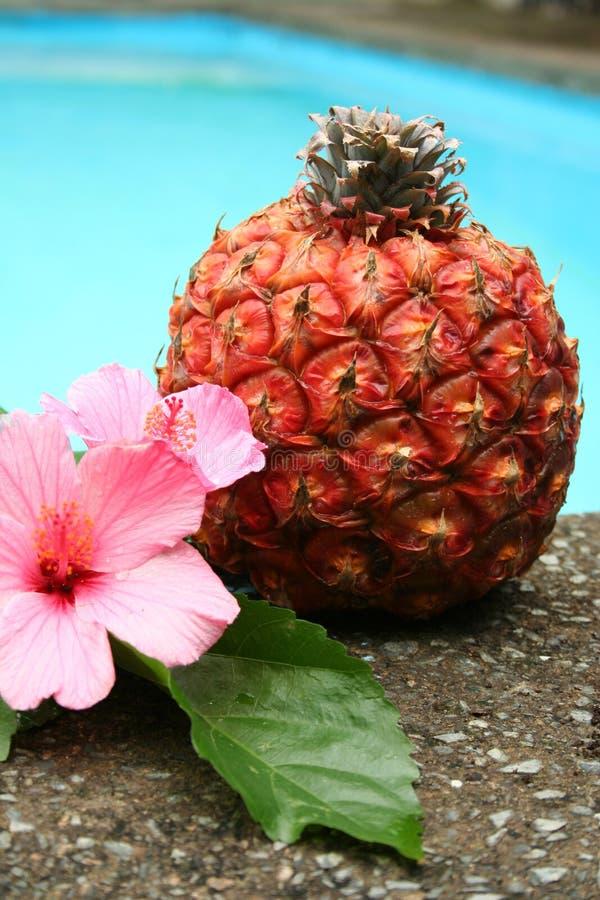 blomma ananas fotografering för bildbyråer