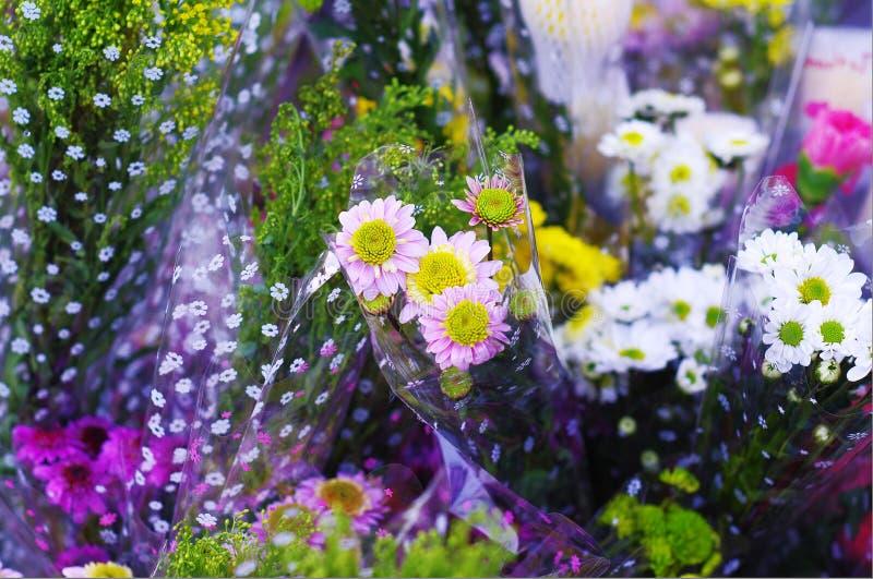 Blomma av blomsterhandeln royaltyfri foto