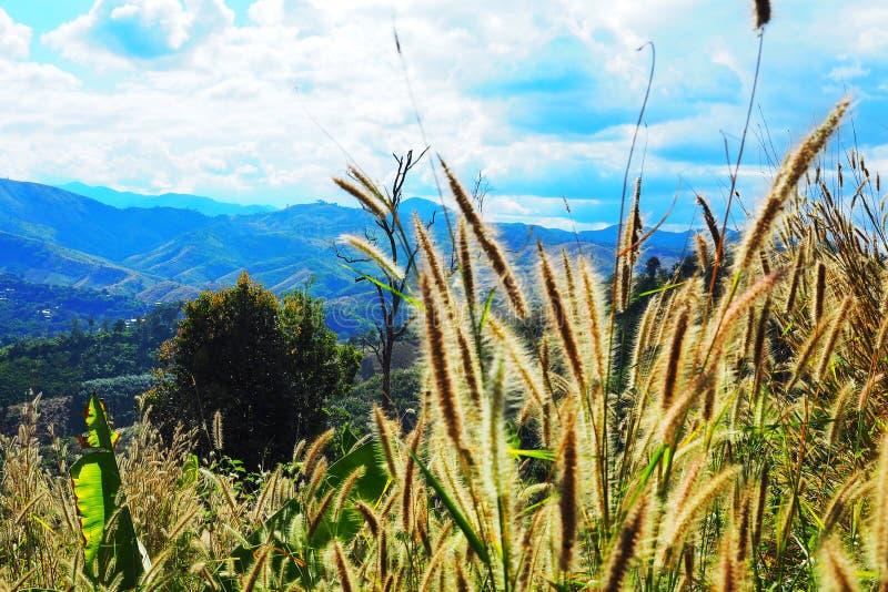 Blomma av gräs på överkanten av kullen fotografering för bildbyråer