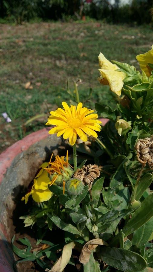 Blomma av naturen arkivfoto