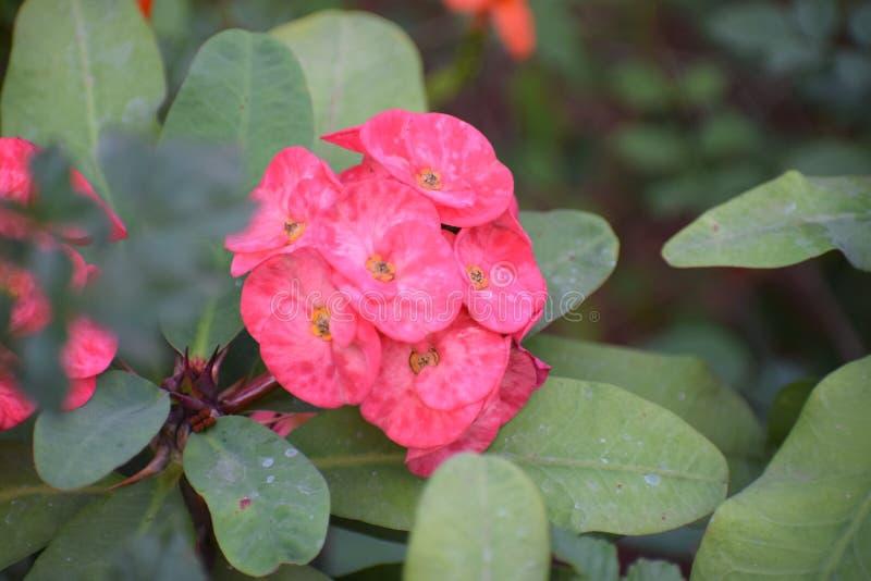 Blomma av skönhet royaltyfria bilder
