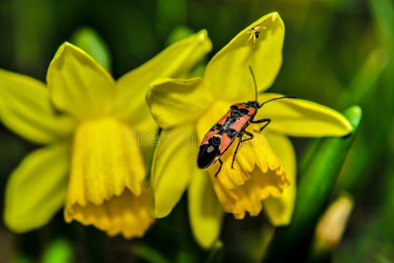 Blomma av våren royaltyfria foton