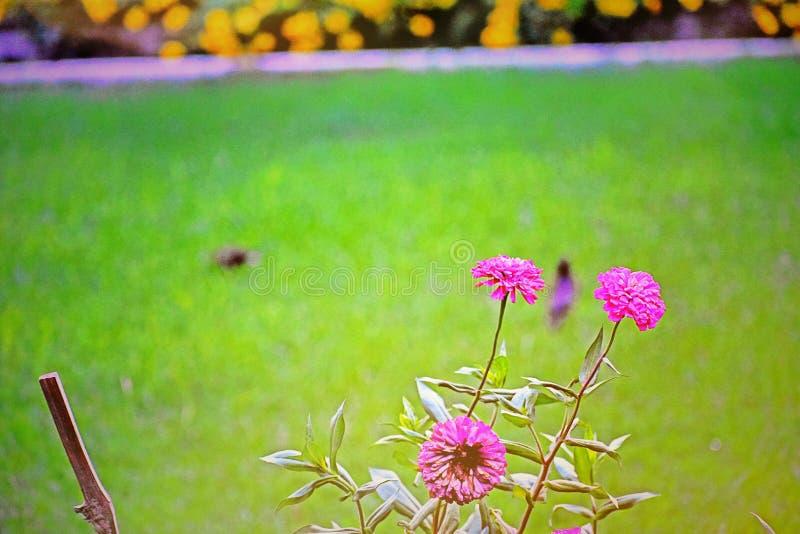 Blomma b26 royaltyfria bilder