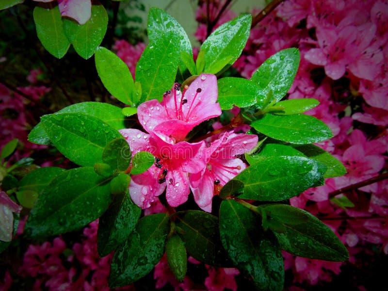 Blomma blomma royaltyfria foton