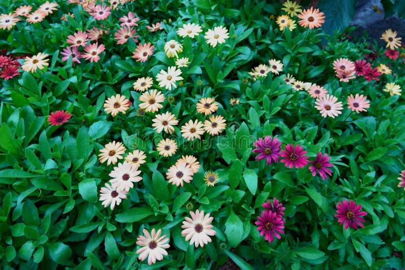 Blomma blommor och trädet i blommakupol på trädgårdar vid fjärden, Singapore arkivbild