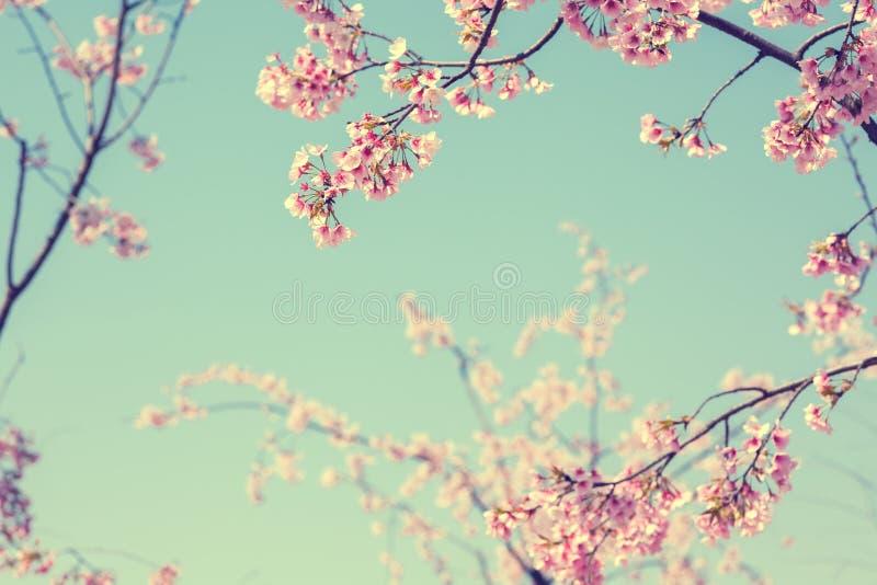 blomma blomningCherry arkivfoto
