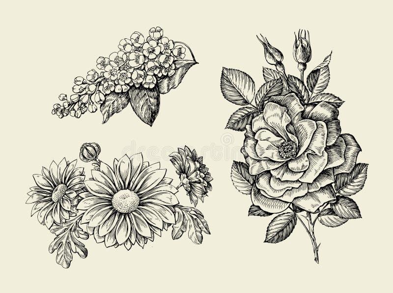 Blomma Den drog handen skissar dogrose, nyponet som är löst steg, hägget, krysantemum också vektor för coreldrawillustration stock illustrationer