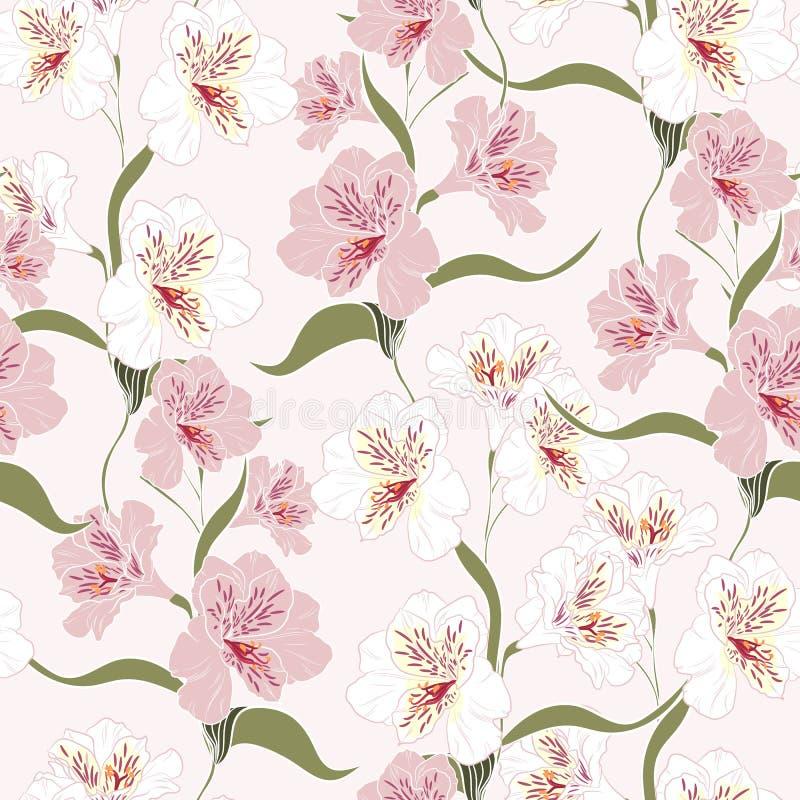 Blomma den sömlösa modellen med härlig vit, och blommor för rosa färgalstroemerialilja förgrena sig stock illustrationer