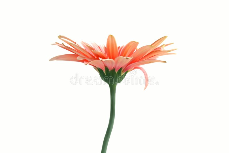 blomma ensamt royaltyfri fotografi