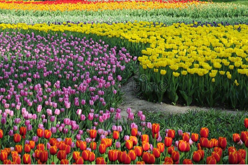 blomma färgblommaträdgård royaltyfri foto