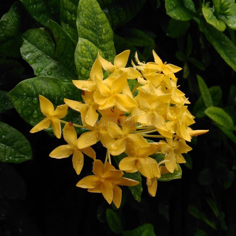 Blomma för blomma arkivbild