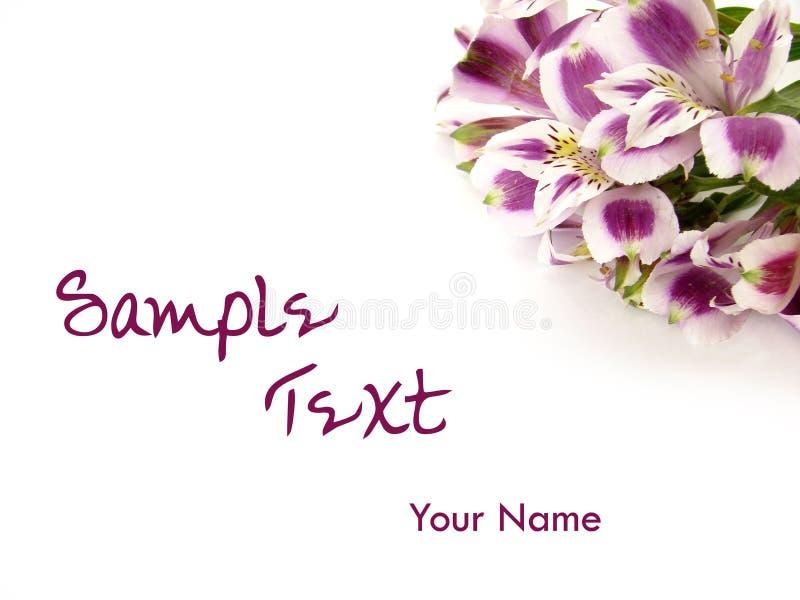 blomma för alstroemeriabakgrundskort fotografering för bildbyråer