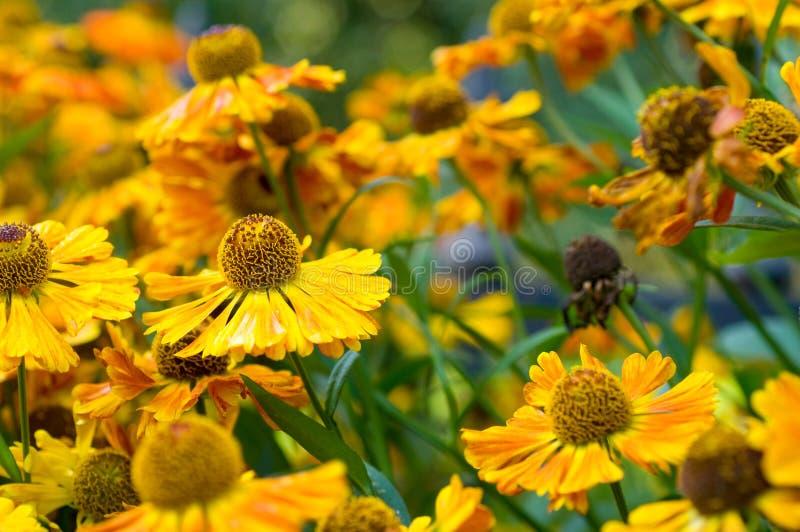 blomma för bakgrundstusenskönafält arkivfoton