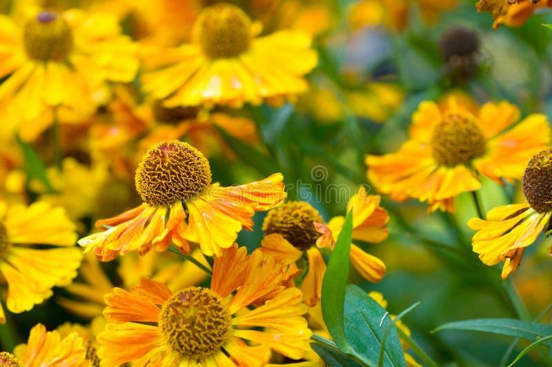 blomma för bakgrundstusenskönafält royaltyfri foto