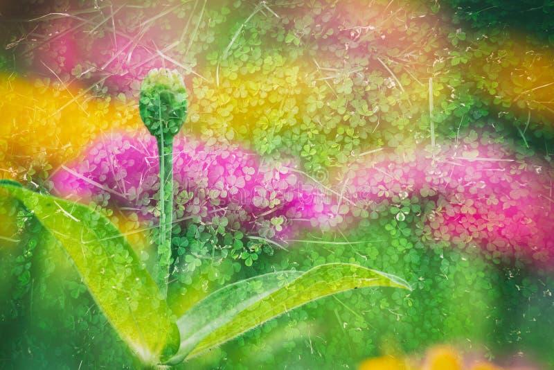 Blomma för dubbel exponering royaltyfri bild