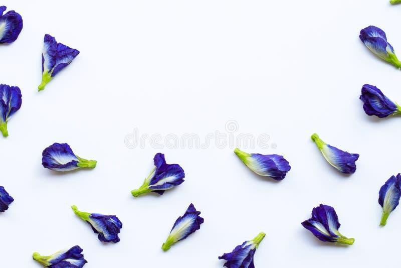 Blomma f?r fj?rils?rta p? vit fotografering för bildbyråer