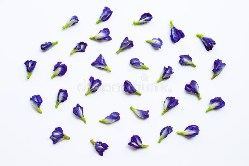 Blomma f?r fj?rils?rta p? vit arkivbilder