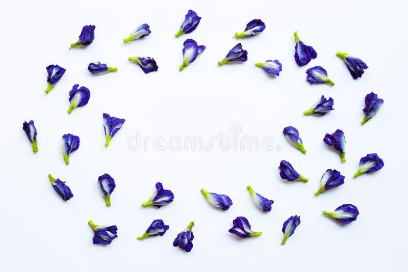 Blomma f?r fj?rils?rta p? vit royaltyfri bild