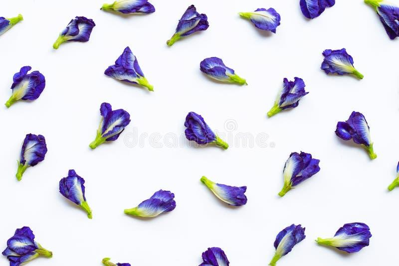 Blomma f?r fj?rils?rta p? vit royaltyfri foto