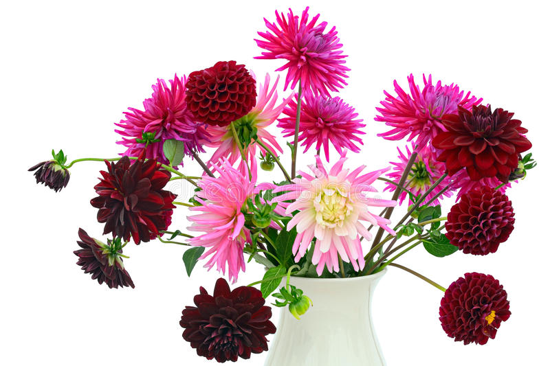 blomma för ordningschrysanthemumsdahlias royaltyfri bild