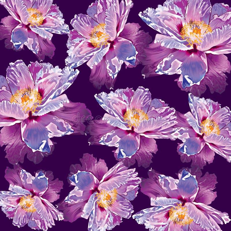 Blomma för prydnad för Paeoniasuffruticosapion vektor illustrationer