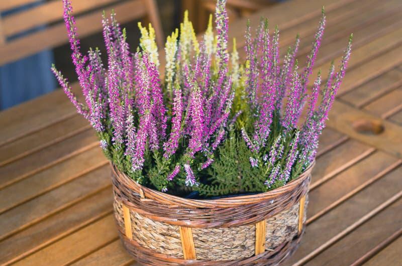 Blomma för purpurfärgad och vit ljung i korgen på trätabellen arkivbild