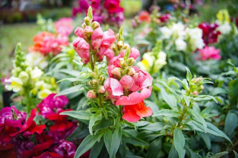 blomma för växt för blommablom färgrik royaltyfri foto