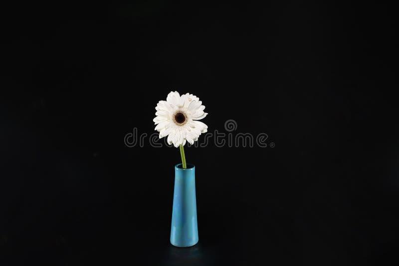 Blomma för vit tusensköna i en vas royaltyfri fotografi