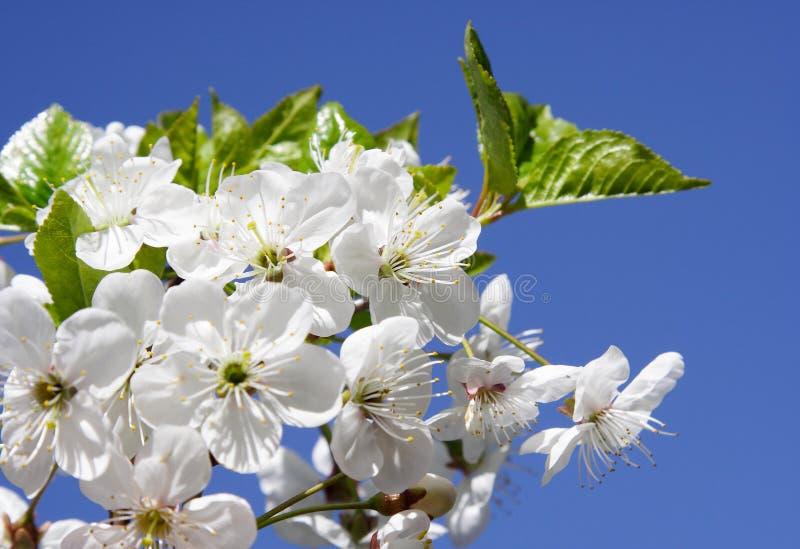 blomma filial arkivfoton