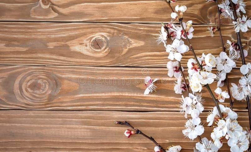 Blomma filialen av aprikons på träbakgrund royaltyfri foto