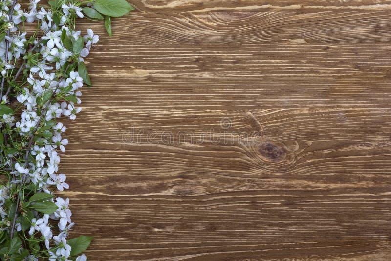 Blomma filialen av körsbäret på träbrädet royaltyfria bilder