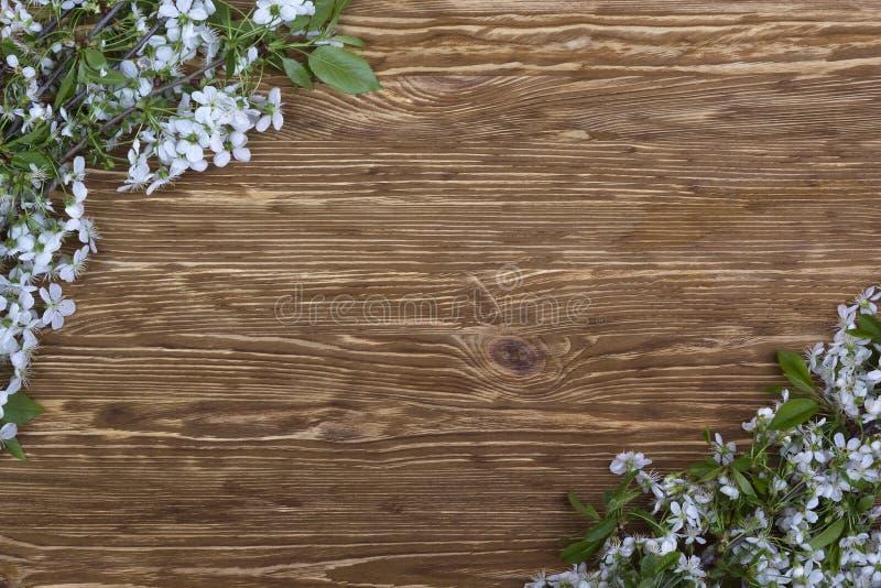 Blomma filialen av körsbäret på träbrädet arkivbild