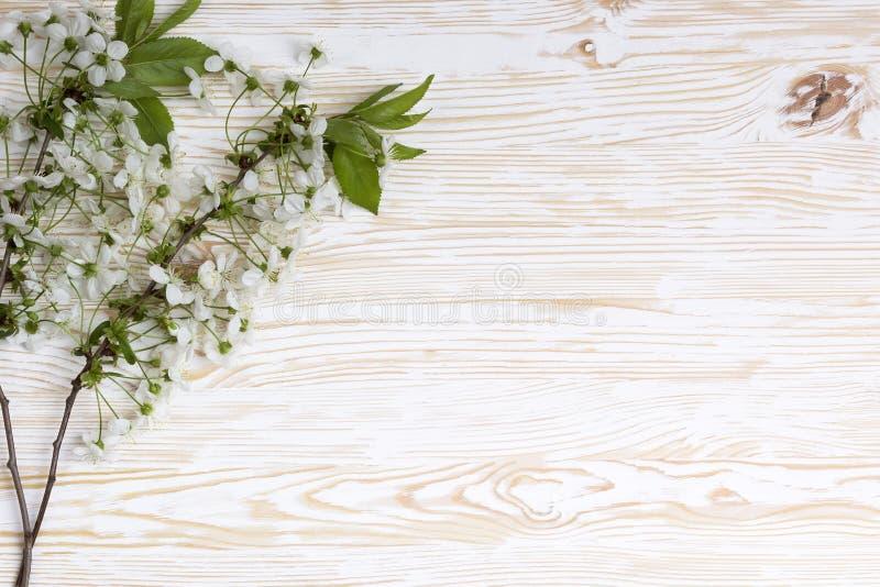 Blomma filialen av körsbäret på träbrädet royaltyfria foton