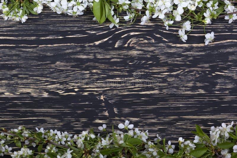 Blomma filialen av körsbäret på träbrädet royaltyfri bild