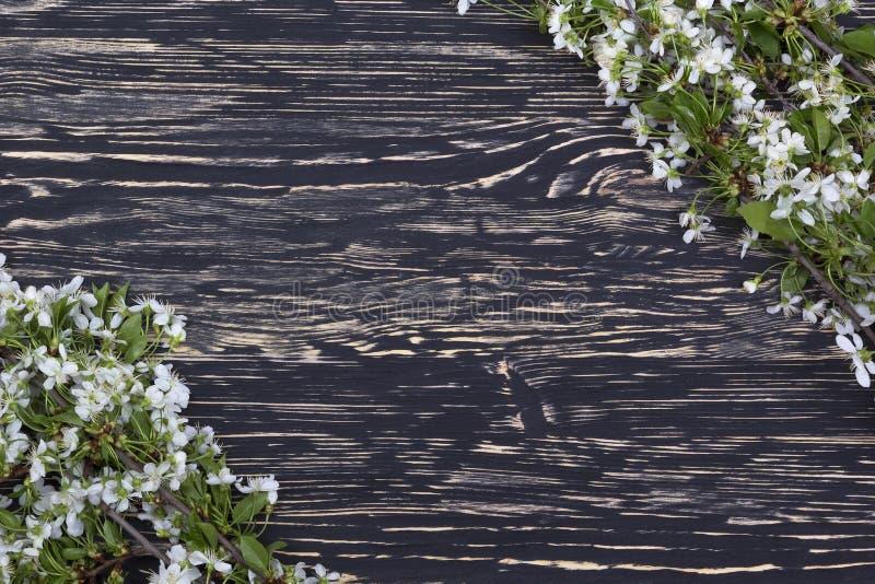 Blomma filialen av körsbäret på träbrädet royaltyfri fotografi