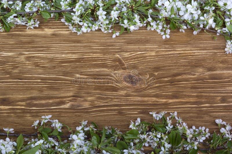 Blomma filialen av körsbäret på träbrädet royaltyfri foto