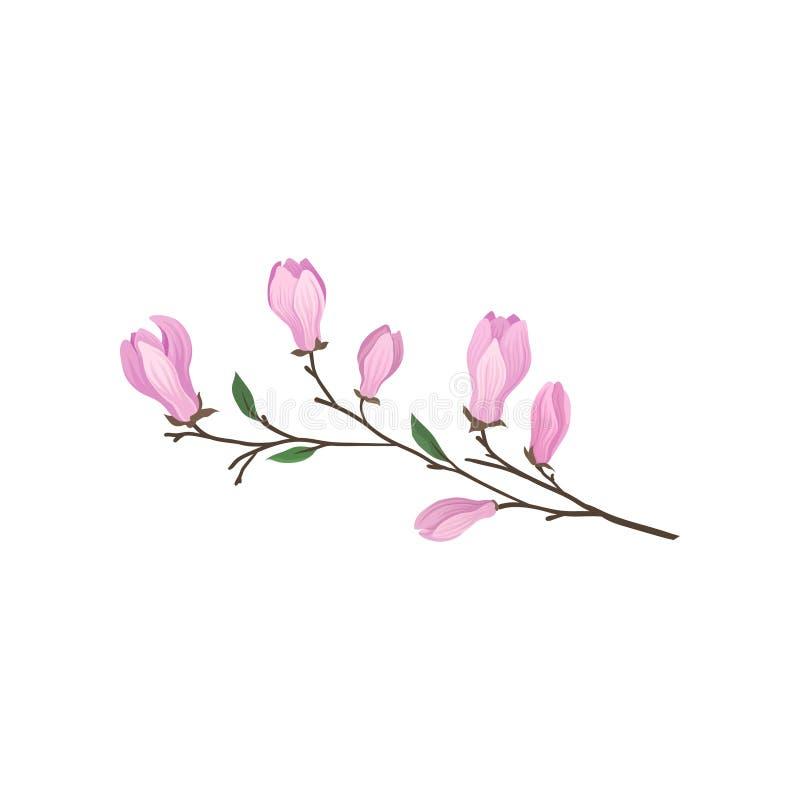 Blomma filialen av magnoliaträdet Fatta med försiktiga rosa blommor Trees som växer från laken, bevattnar Detaljerad plan vektors royaltyfri illustrationer