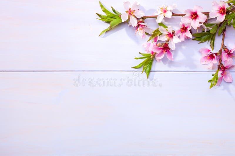 Blomma filialer av mandeln på en ljus lila trätabell arkivbilder