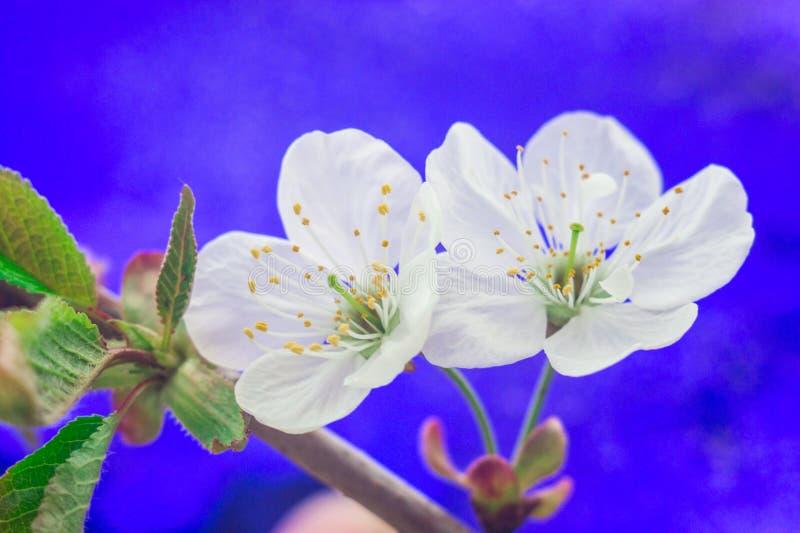 blomma filialtree arkivfoto