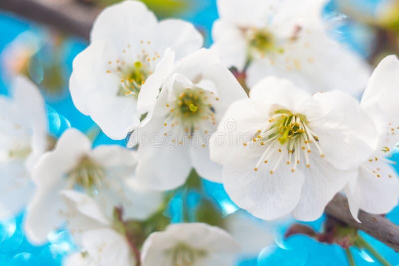 blomma filialtree arkivfoton