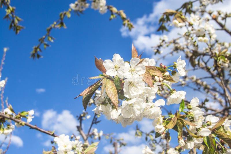 blomma filialtree royaltyfria bilder