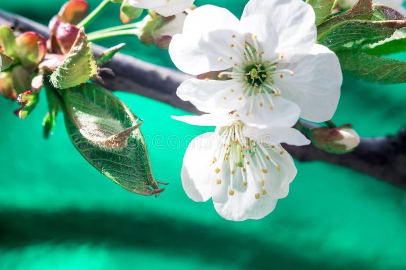 blomma filialtree royaltyfri foto
