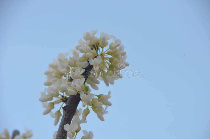 blomma fjäder royaltyfria bilder