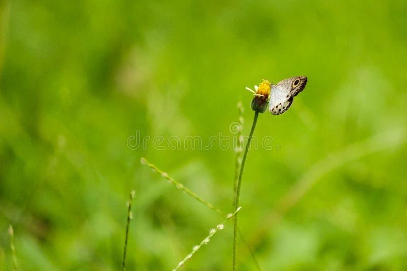 Blomma & fjäril royaltyfri fotografi