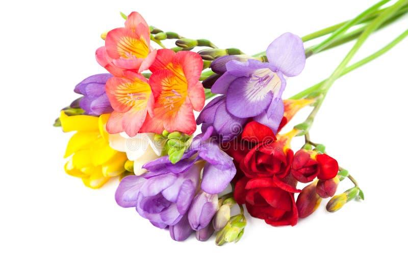 blomma freesia arkivfoto