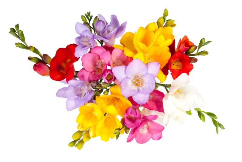 blomma freesia arkivbild