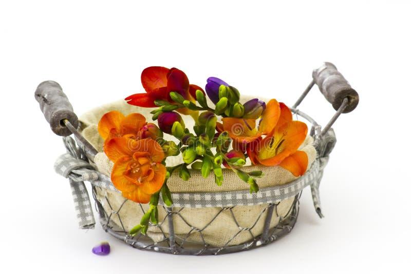 Blomma freesia i en korg arkivbilder